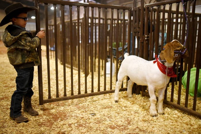 011318_LivestockAuction_JLD_03